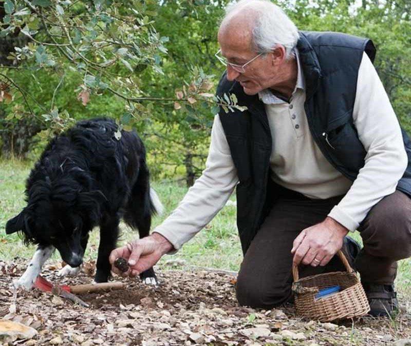 Pechalifour: La truffe en Périgord Noir