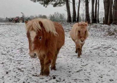 anes_neige_1