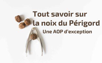Tout savoir sur la noix du Périgord