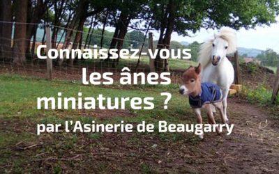 Connaissez-vous les ânes miniatures ?