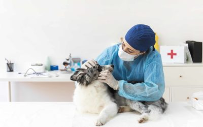 Vétérinaires Salignac