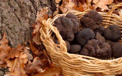 Partez à la découverte de la truffe noire du Périgord