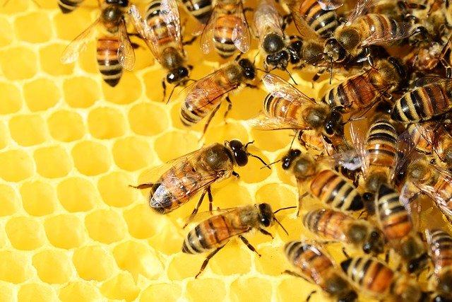 abeilles_bestof-sarlat